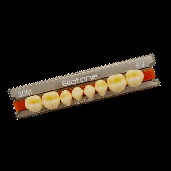 Dente Biotone Posterior/Superior 32L 66