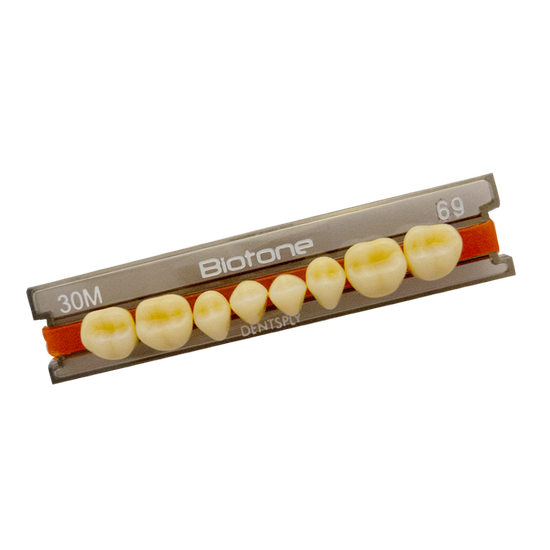 Dente Biotone Posterior/Superior 34L 66